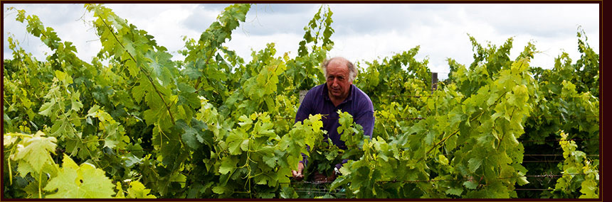 Organic wine farming of Chateau Guillotin
